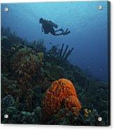 Scuba Diver Swims Underwater Amongst Acrylic Print