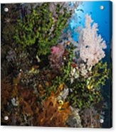 Sea Fan On Soft Coral In Raja Ampat Acrylic Print