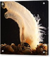 Sea Vase Acrylic Print