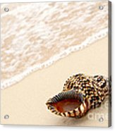 Seashell And Ocean Wave Acrylic Print by Elena Elisseeva