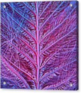 Sem Of Eastern Bluebird Feathers Acrylic Print