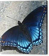 Smoky Mountain Butterfly Acrylic Print