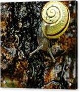 Snail, Pointe-des-cascades, Quebec Acrylic Print