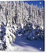 Snow-covered Pine Trees On Mount Hood Acrylic Print by Natural Selection Craig Tuttle