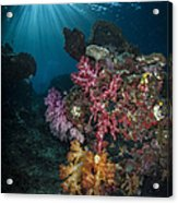 Soft Coral And Sunburst In Raja Ampat Acrylic Print