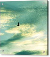Solo Flight Acrylic Print