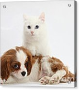 Spaniel Puppy And Kitten Acrylic Print