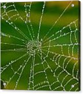 Spiderweb With Dew Drops Acrylic Print