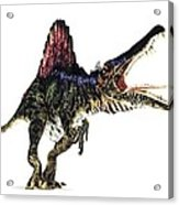 Spinosaurus Dinosaur, Artwork Acrylic Print by Animate4.comscience Photo Libary