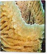 Sponge Acrylic Print