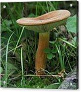 Spring Mushroom Acrylic Print