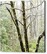 Spring Snow Along Williams River Scenic Byway Acrylic Print