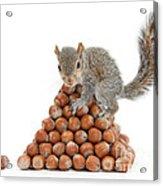 Squirrel And Nut Pyramid Acrylic Print