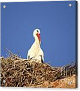Storks In Marrakech Acrylic Print