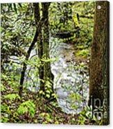 Stream Monongahela National Forest Acrylic Print