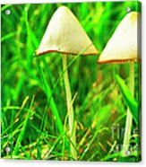 Stump Fairy Helmet Acrylic Print by Thomas R Fletcher