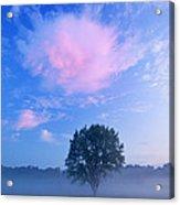 Summer Meadow At Dawn Acrylic Print