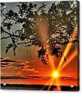 Summers Breeze Sunsets Through Tress Acrylic Print