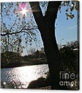 Sun Star Acrylic Print