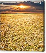 Sunset Wheat Acrylic Print
