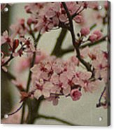Sweet Spring Acrylic Print by Terrie Taylor
