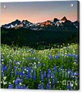 Tatoosh Dawn Acrylic Print by Mike  Dawson