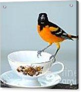 Tea Anyone Acrylic Print