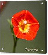 Thank You - Card Acrylic Print