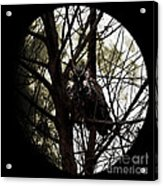 The Night Owl And Harvest Moon Acrylic Print