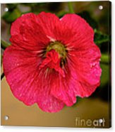 The Red One Acrylic Print
