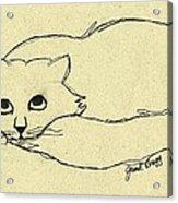 Thomas The Cat Acrylic Print
