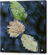 Three Leaves Acrylic Print