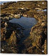Tidepool In Maine Acrylic Print