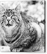 Tomcat Acrylic Print by Frank Tschakert