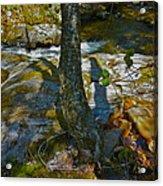 Tree And 3 Shadows Acrylic Print