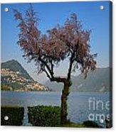 Tree And Mountain Acrylic Print