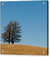 Tree Formation On A Hill Acrylic Print