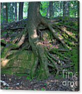 Tree Growing Over A Rock Acrylic Print by Ted Kinsman