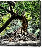 Tree Of Life Acrylic Print by Kenneth Mucke