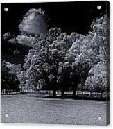Trees At The Carabobo Field Acrylic Print