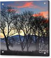 Trees With Fog Acrylic Print