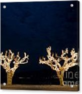 Trees With Lights Acrylic Print