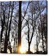 Trees With Sunlight Acrylic Print