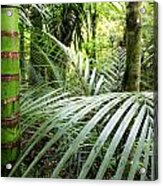 Tropical Jungle Acrylic Print