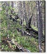 Tunguska Forest Acrylic Print