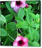Twin Wild Flowers Acrylic Print