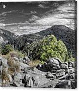 Upper View Acrylic Print