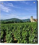 Vineyard. Regnie-durette. Beaujolais Wine Growing Area. Departement Rhone. Region Rhone-alpes. Franc Acrylic Print