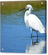 Wading In Silence Acrylic Print