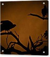 Watcher Acrylic Print